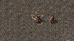 传奇单机简单入手战士召唤骷髅